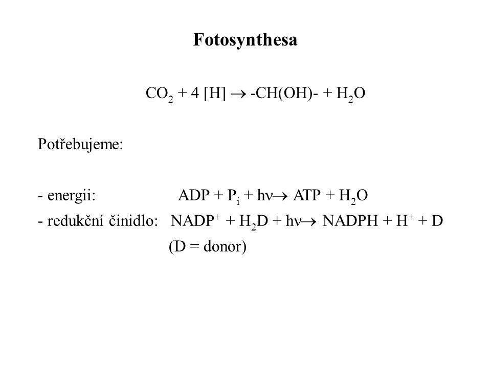 Fotosynthesa CO2 + 4 [H]  -CH(OH)- + H2O Potřebujeme: